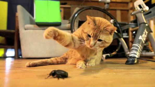 cat vs bug